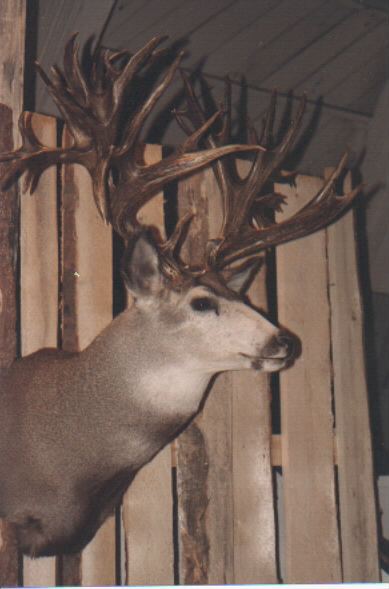 Broder Buck