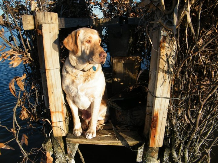 In the duck blind