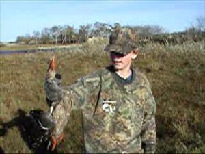 Kyle's Shoveler duck