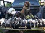 Jasper and our duck season opening hunt