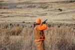 pheasant kill